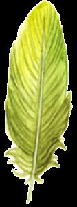 icone plume chant vibratoire