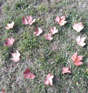 Coeur-formé-feuilles-nature