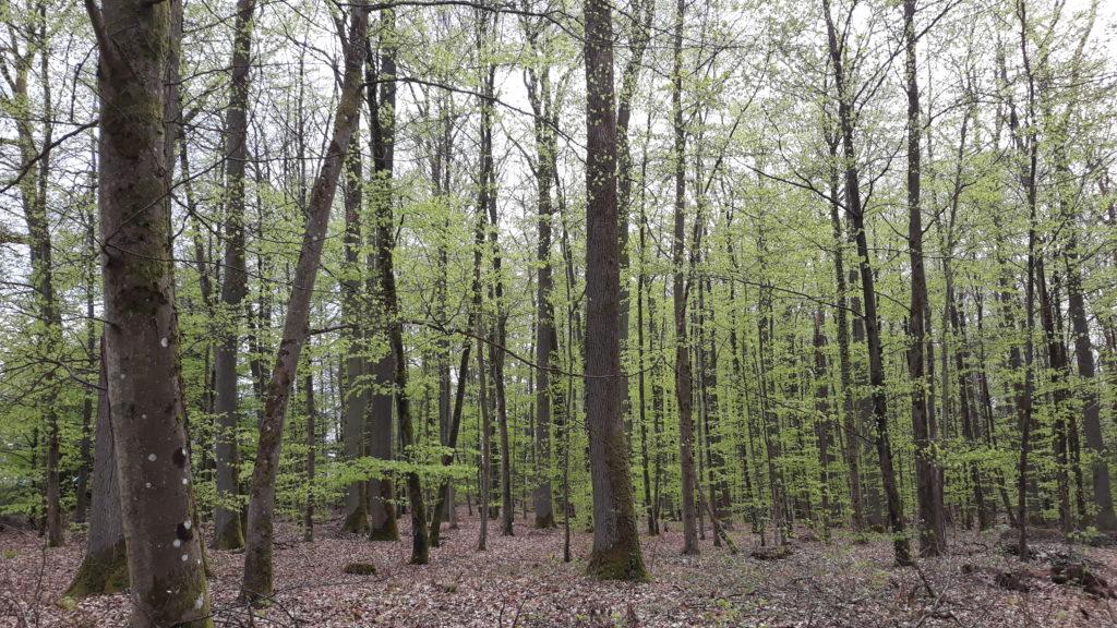 Feuilles vertes arbres