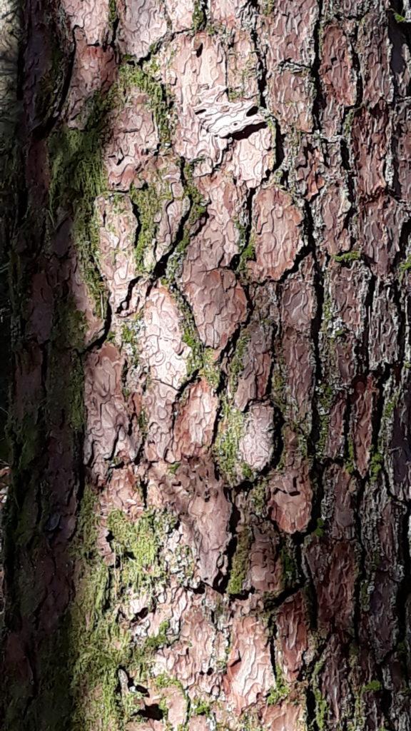 Tronc arbre écorce