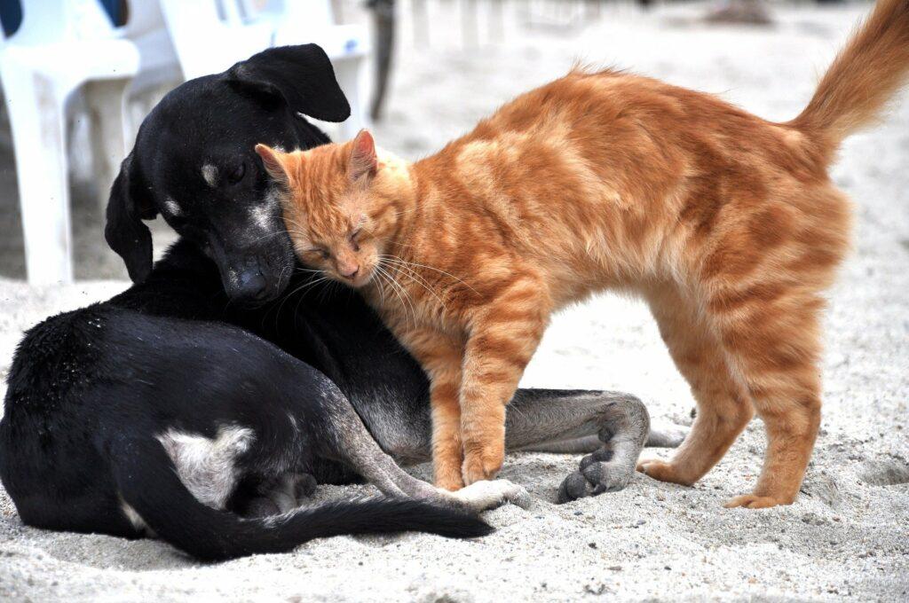 Chat roux se calinant sur chien noir